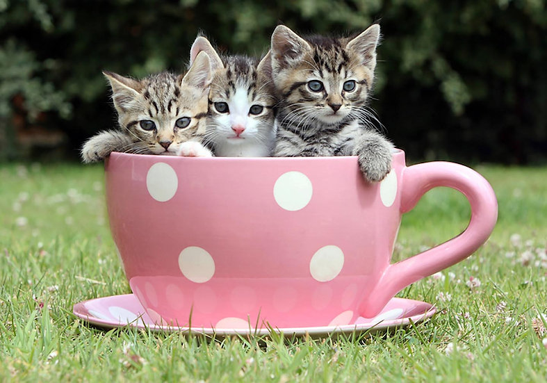 Kittens in a Tea Cup.