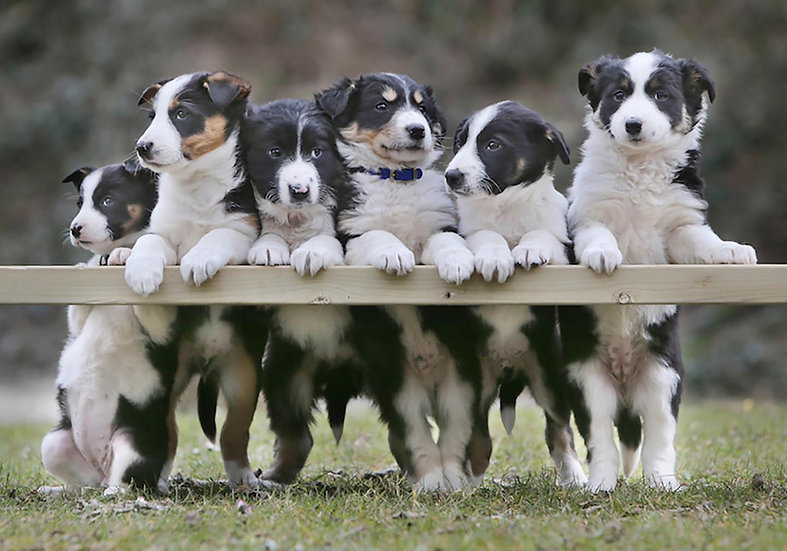 Doggy Line-up.