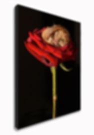 Little Rose, Richard Austin Images