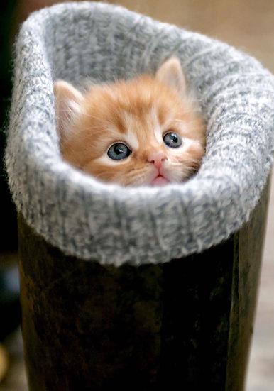 Kitten in wellie.