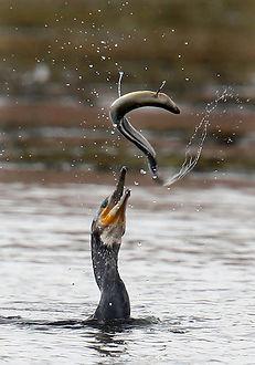 Nice Catch, Richard Austin Images