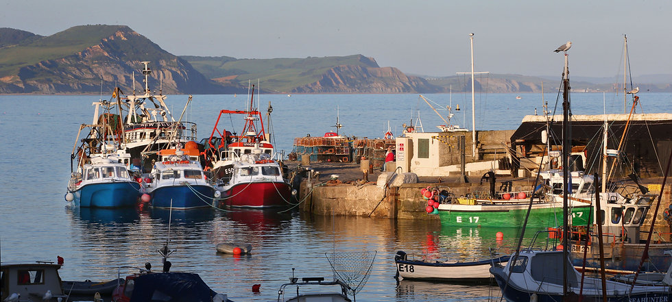 Early Morning Harbour, Lyme Regis.