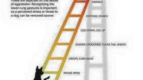 DOG AGGRESSION SIGNS