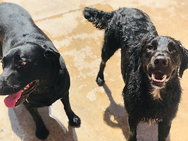 Ruby & Dillon.jpg