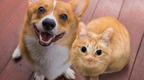 Should I Get Pet Insurance?