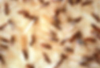 Termite Swarm Rockland