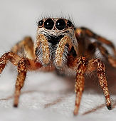 Rockland Spider Identifcation