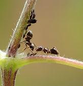 Rockand Pest Identifcation Ant