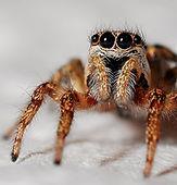 Rockand Pest Identifcation Spider