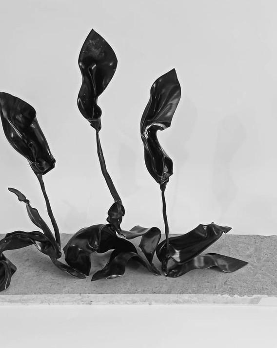 Peace Lily,3.jpeg