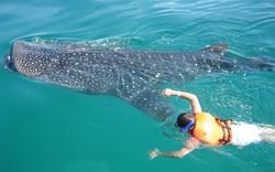 SECTURE-Avistamiento-y-nado-con-tiburón-ballena-2