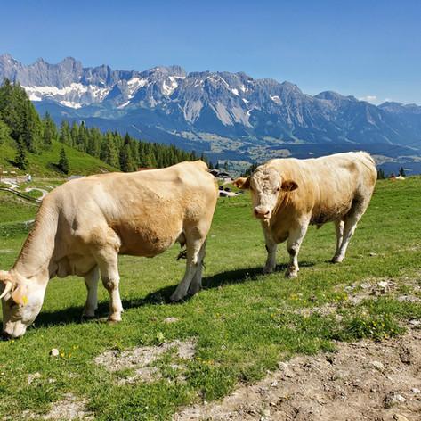 Reiteralm, Austria