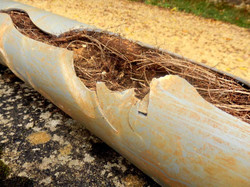 Drain Master Clogged Roots in Pipe