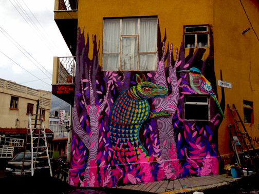 Pachucha - Mexico 2014