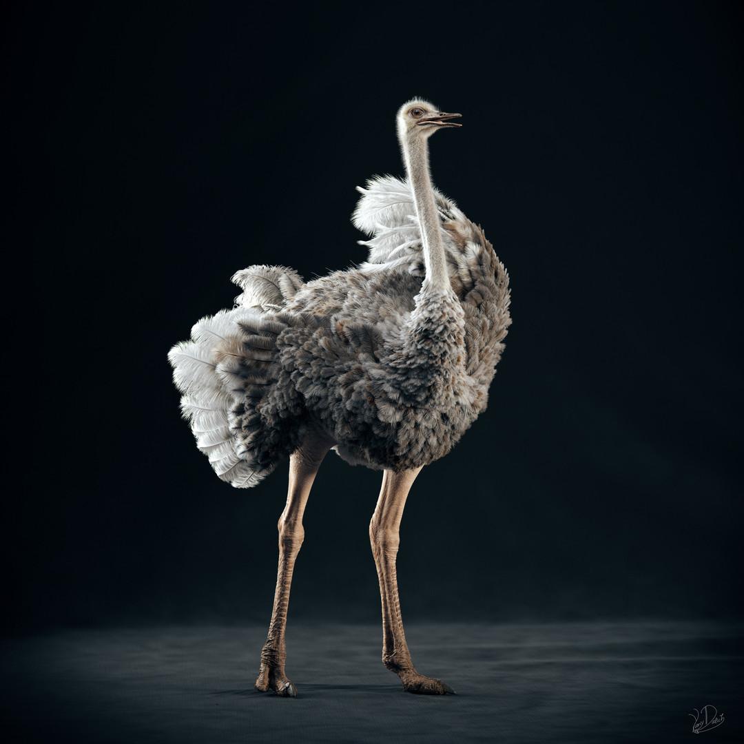 Ostrich_STAND1.jpg