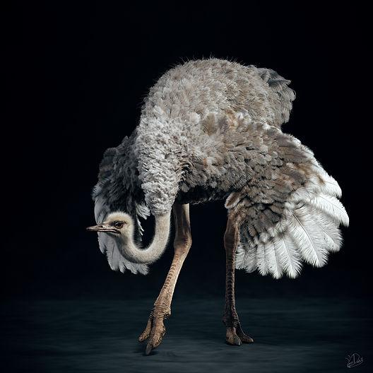 Ostrich_STAND2.jpg