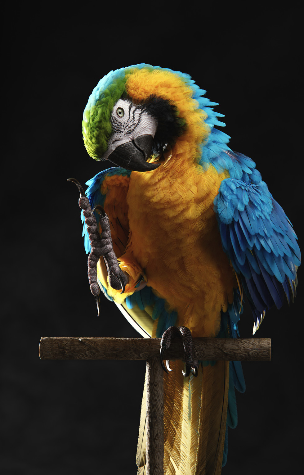 Hello Blue-and-Gold Macaw