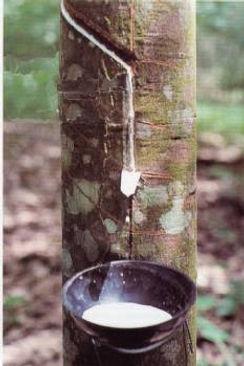 Con l'aggiunta di poche unità percentuali di zolfo al lattice dell'albero di caucciù seguita da riscaldamento avviene il processo di vulcanizzazione di gomma naturale: Hard Rubber