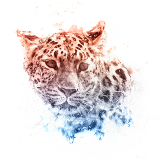 Leopard-Final.png