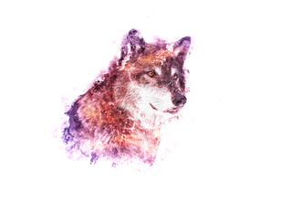wolf7.png