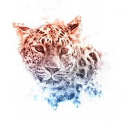 Leopard-Final