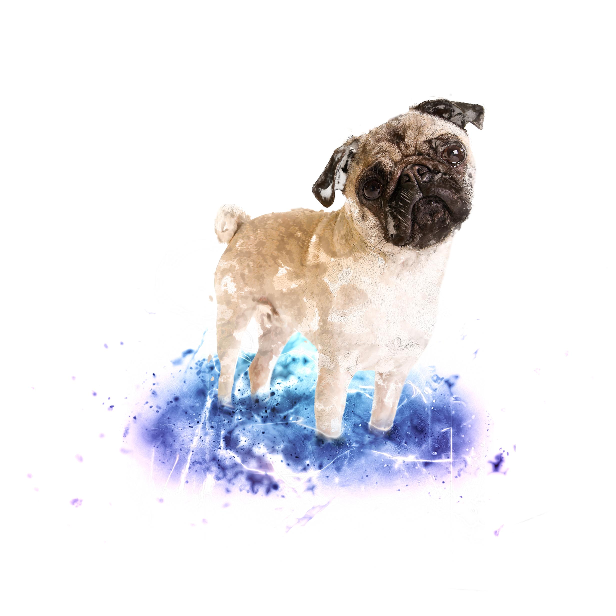 pug-blue-purple