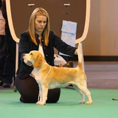 March 2009 Honey Crufts.jpg