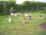 May 2008 d&c all dogs.jpg