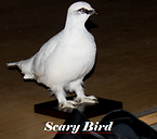 Scary Bird.PNG
