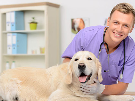 How to Buy a Veterinary Practice- A Step by Step guide to Buying a Veterinary Practice