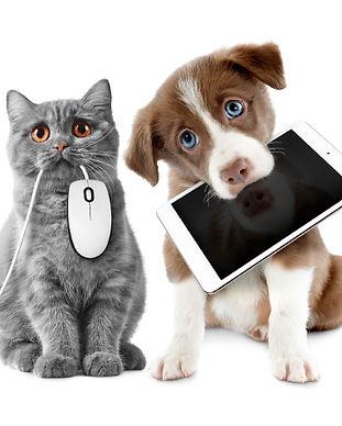 Cat_Dog_computer.jpg
