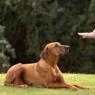 see-dog-training-320x213.jpg