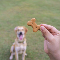 Resized_dog-trainer.jpeg