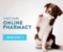 Online Pharmacy.png