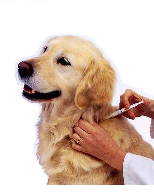 Dog-Vaccinations-At-Maybeck-Animal-Hospi