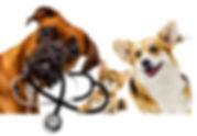 vet dog and cat.jpg