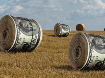 О земельной реформе: законопроект 4355 или уничтожение социального эффекта отмены моратория