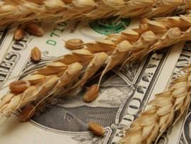 Урожай и курс: повлияет ли уменьшение экспорта пшеницы на стабильность гривны