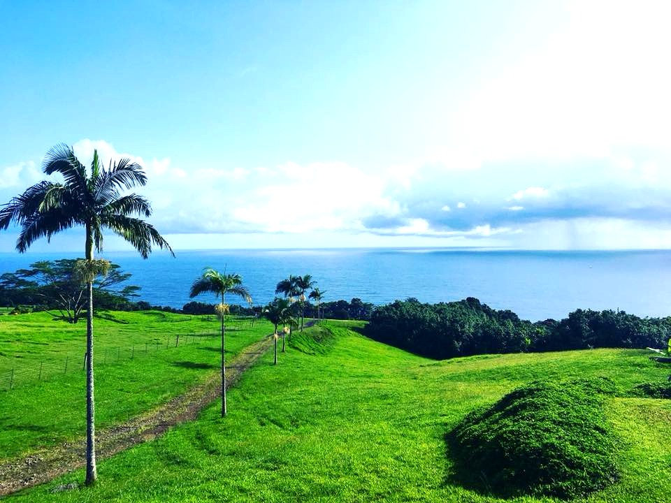 hawaii%20landscape_edited.jpg
