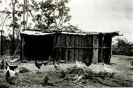 Residence (Jesson) - bark.JPG
