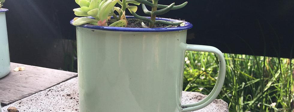 Tazón de suculentas mini verde
