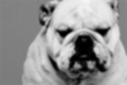 Bulldog's Barbershop