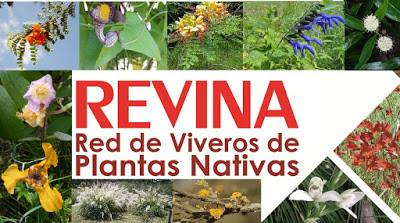 Conocé a uno de nuestros aliados estratégicos: la Red de Viveros de Plantas Nativas de Argentina