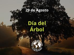Celebramos, una vez más, el Día del Árbol Juntos #PlantandoVida
