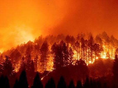 En tiempos en que los bosques arden