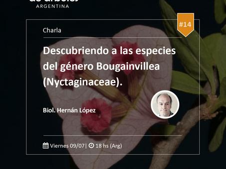 ¿Sabés cuáles son las especies del género Bougainvillea? ¡Agendá el 9 de julio!