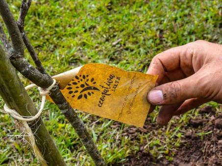 Econativa y Millón de Árboles avanzan en Salta con el desafío de plantar árboles nativos