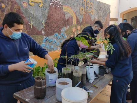 El Colegio Jacques  Cousteau impulsa un vivero forestal desde el cual donan árboles a la comunidad