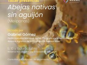 Nueva edición del curso presencial Producción de abejas sin aguijón: Regeneración Ecosistémica