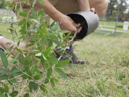 200 new native trees in La Rioja (La Rioja) and San Fernando (Buenos Aires).